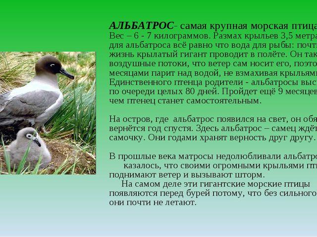 АЛЬБАТРОС- самая крупная морская птица Вес – 6 - 7 килограммов. Размах крылье...