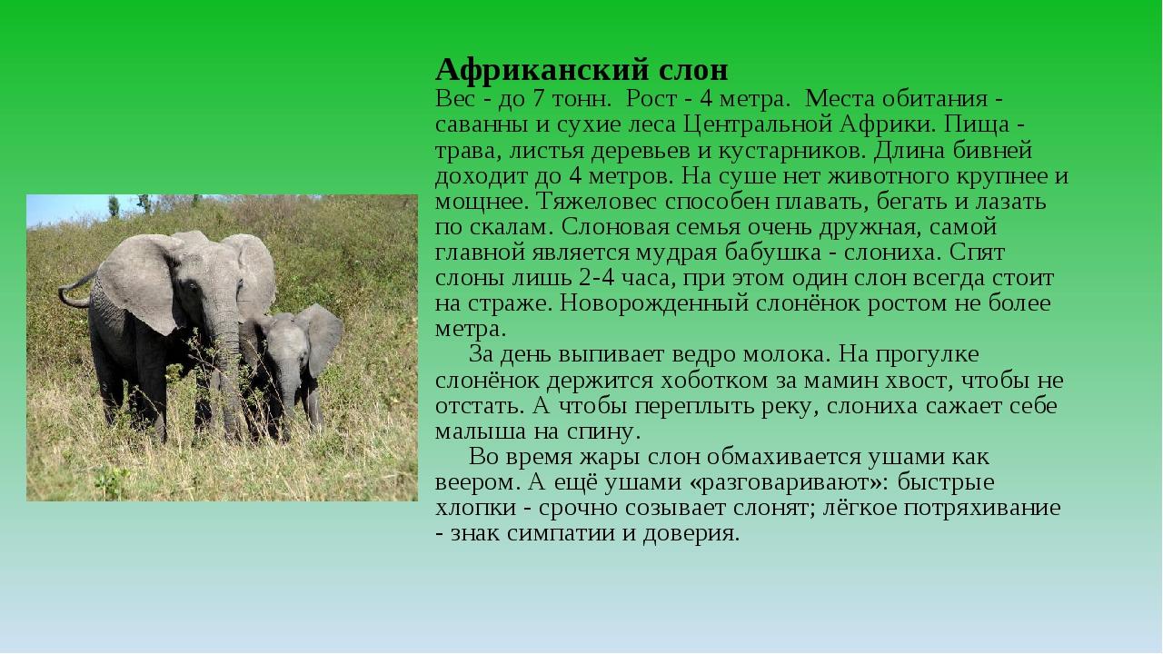 Африканский слон Вес - до 7 тонн. Рост - 4 метра. Места обитания - саванны и...