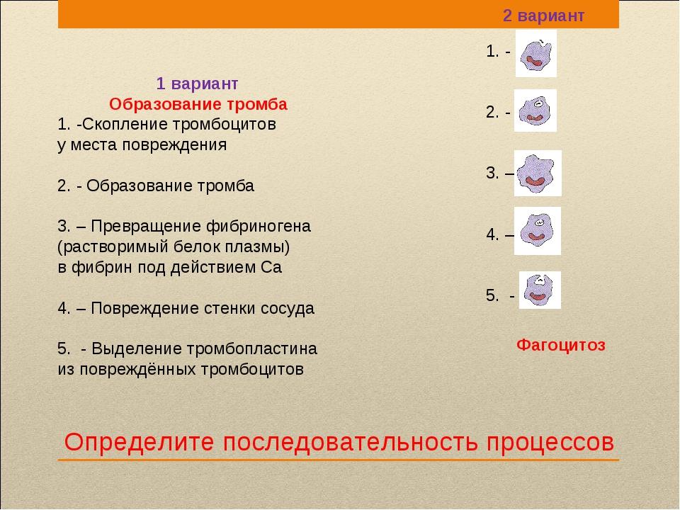 Определите последовательность процессов 1. - 2. - 3. – 4. – 5. - 1 вариант Об...