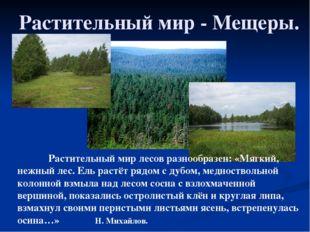 Растительный мир - Мещеры. Растительный мир лесов разнообразен: «Мягкий, не