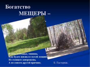 Богатство МЕЩЕРЫ – лес. В лесу молчанье, тишина, Как будто жизнь в