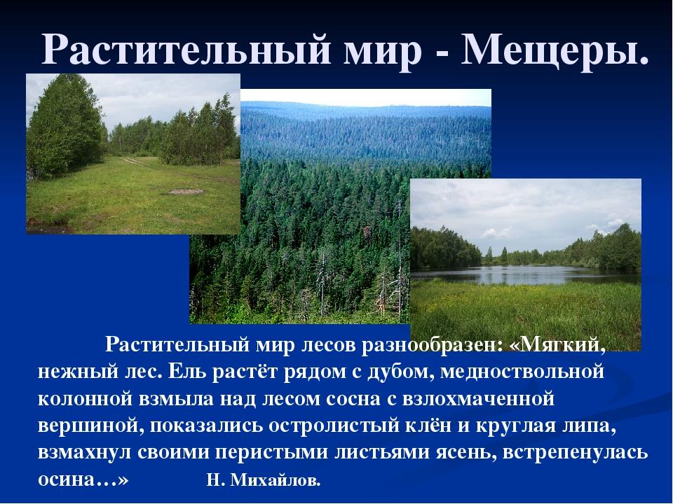 Растительный мир - Мещеры. Растительный мир лесов разнообразен: «Мягкий, не...