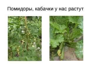 Помидоры, кабачки у нас растут