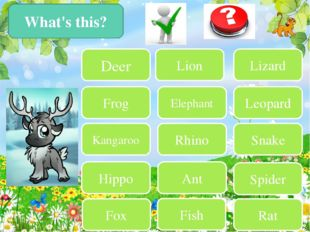 What's this? Deer Frog Kangaroo Hippo Fox Lion Lizard Elephant Leopard Rhino