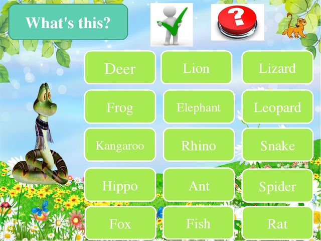 What's this? Deer Frog Kangaroo Hippo Fox Lion Lizard Elephant Leopard Rhino...