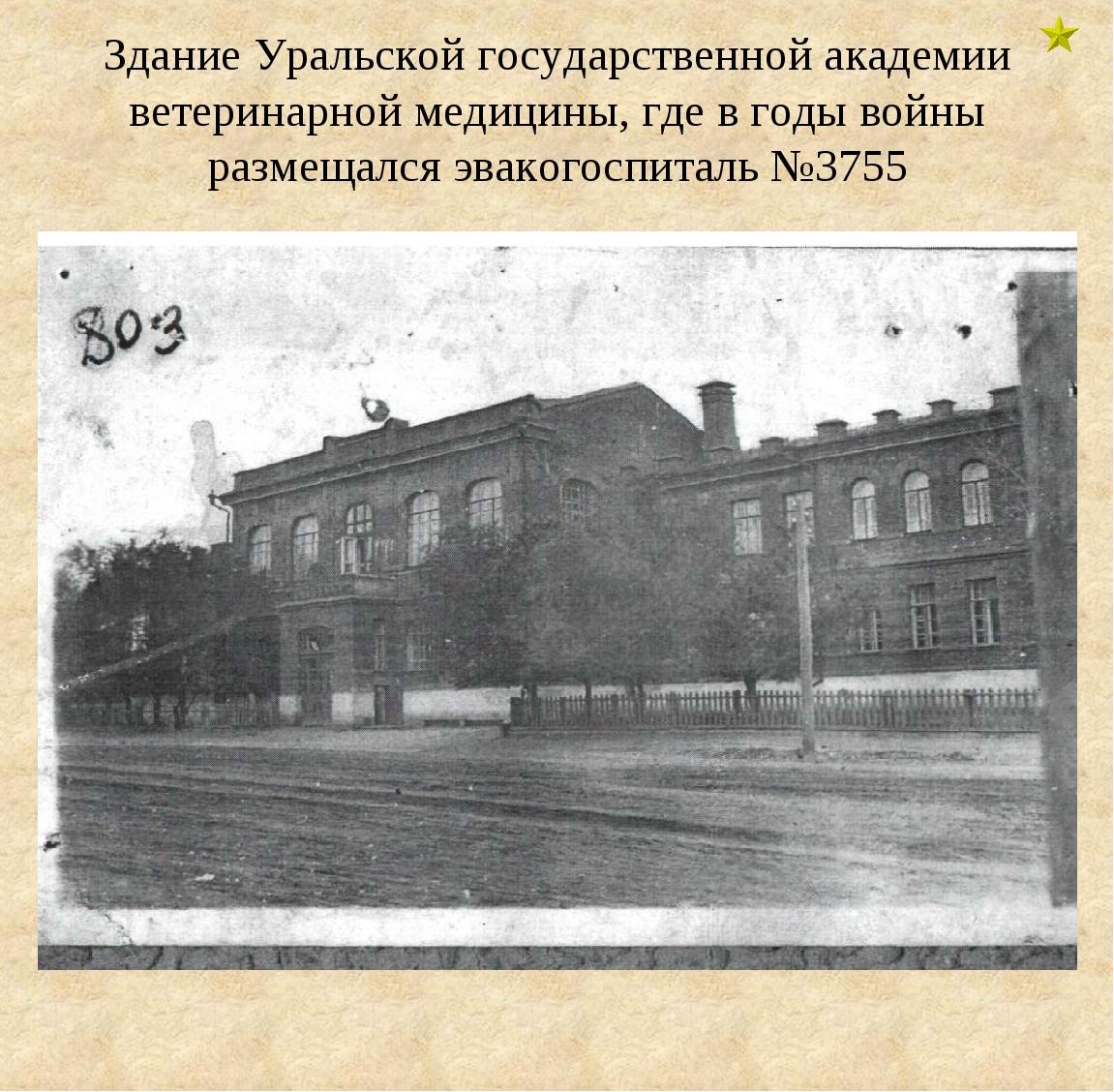 Здание Уральской государственной академии ветеринарной медицины, где в годы в...