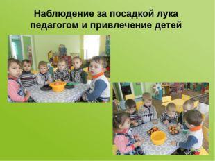 Наблюдение за посадкой лука педагогом и привлечение детей