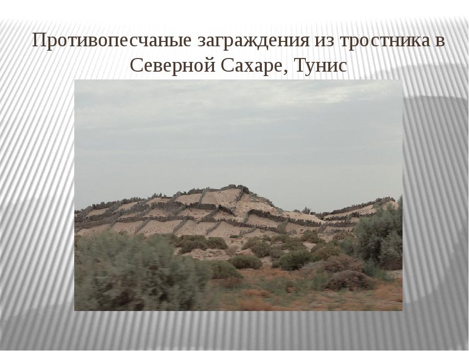 Противопесчаные заграждения из тростника в Северной Сахаре, Тунис