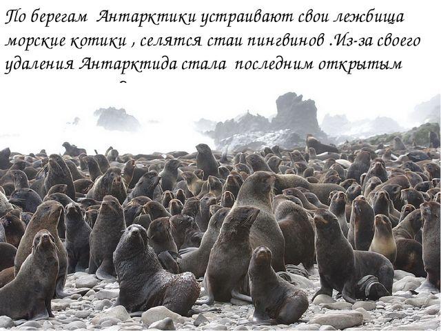 По берегам Антарктики устраивают свои лежбища морские котики , селятся стаи п...