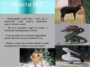 Факти №2 Найменший в світі бик— аноа, що в дорослому стані досягає приблизно