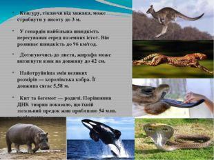 Кенгуру, тікаючи від хижака, може стрибнути у висоту до 3 м. У гепардів найб
