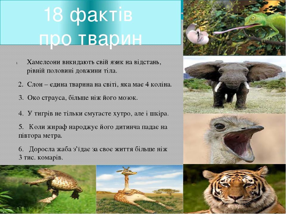 18 фактів про тварин Хамелеони викидають свій язик на відстань, рівній полови...