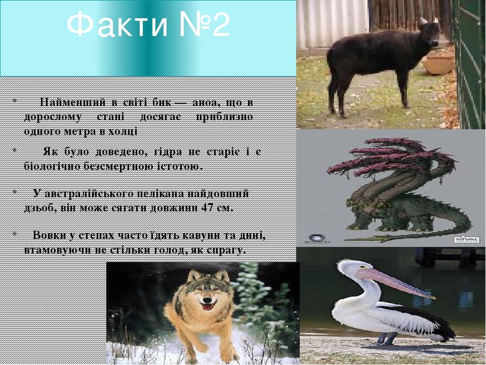 Факти №2 Найменший в світі бик— аноа, що в дорослому стані досягає приблизно...