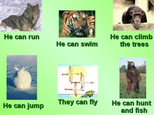 He can swim He can climb the trees He can run He can jump They can fly He can