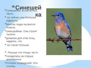 Синешейка Синешейки, встречались часто, носейчас они большая редкость. Многи