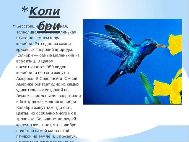 Колибри Бесстрашная, энергичная, запасливая. Самая маленькая птица на земном...
