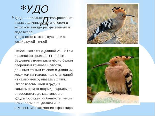 УДОД Удод— небольшая яркоокрашенная птица с длинным узким клювом и хохолком,...