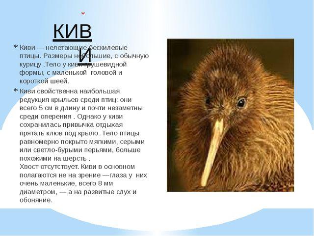 КИВИ Киви—нелетающиебескилевые птицы. Размеры небольшие, с обычную курицу...