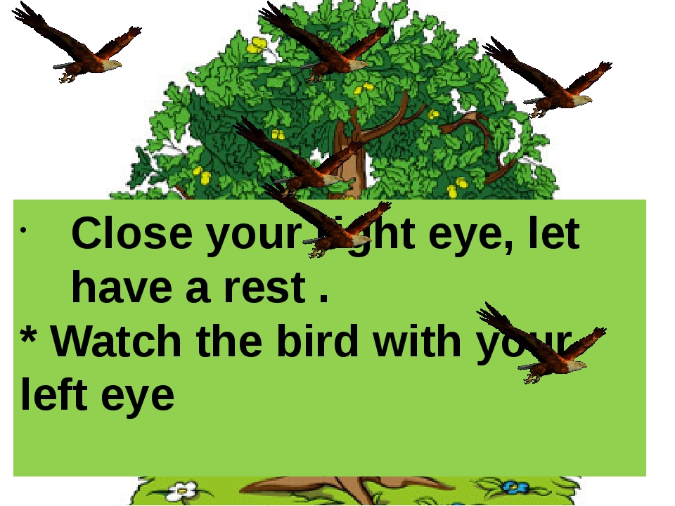 Close your right eye, let have a rest . * Watch the bird with your left eye
