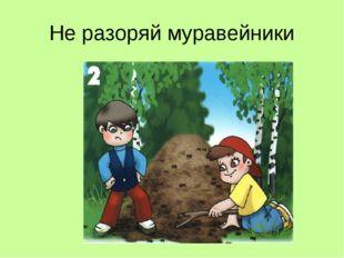 Не разоряй муравейники