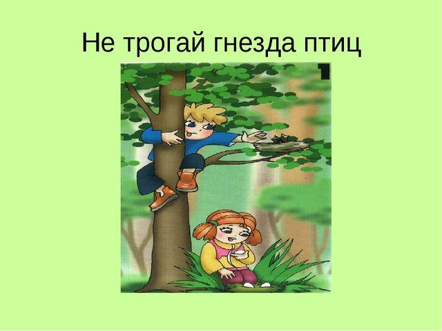 Не трогай гнезда птиц