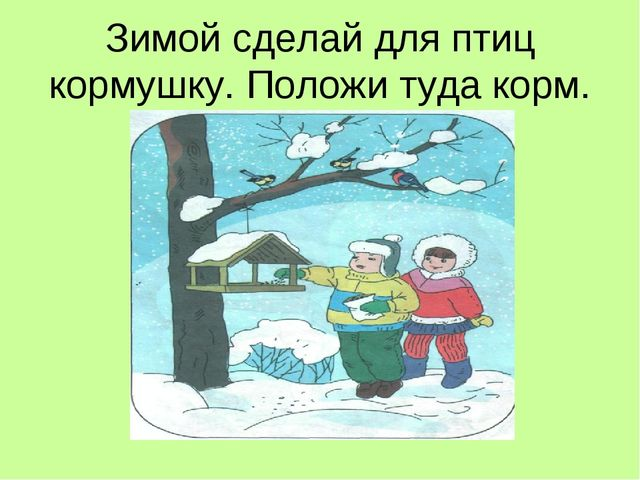 Зимой сделай для птиц кормушку. Положи туда корм.