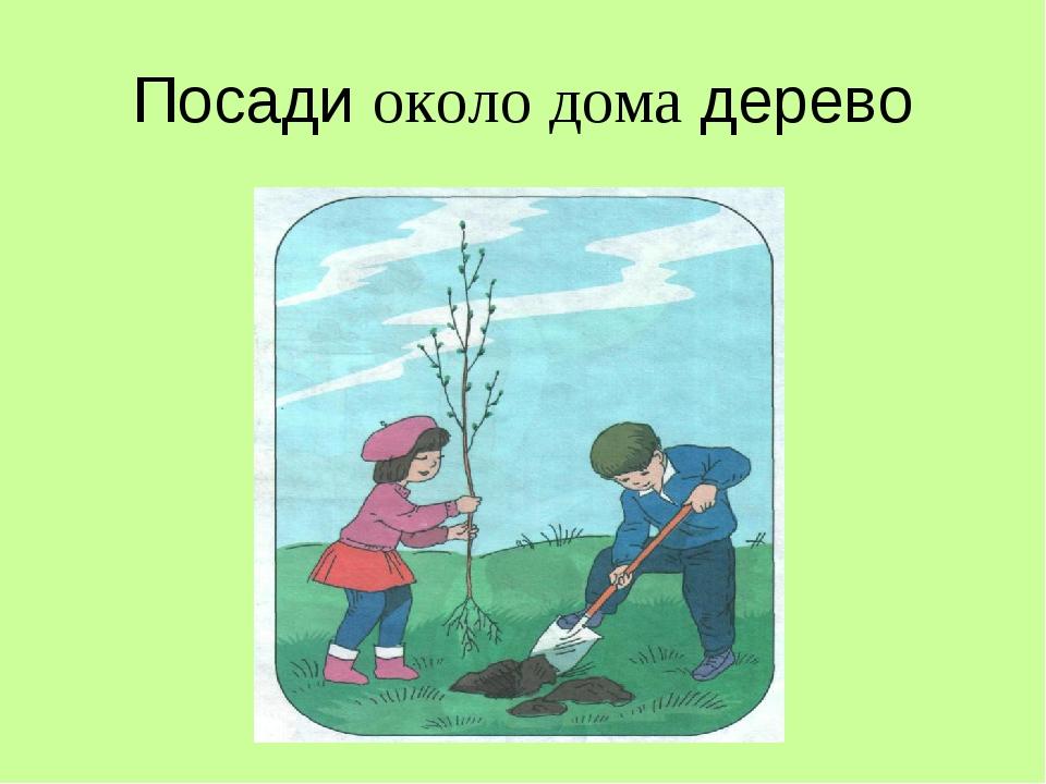 Посади около дома дерево