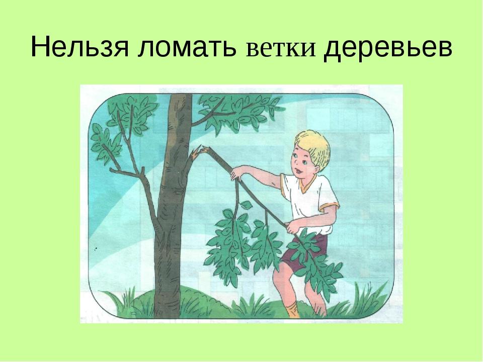 Нельзя ломать ветки деревьев