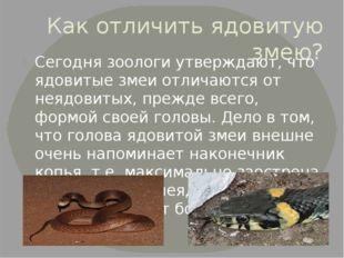 Как отличить ядовитую змею? Сегодня зоологи утверждают, что ядовитые змеи отл