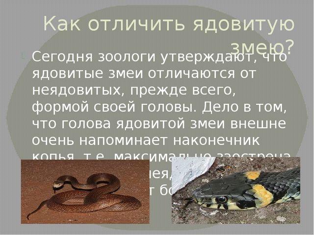 Как отличить ядовитую змею? Сегодня зоологи утверждают, что ядовитые змеи отл...