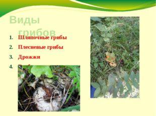 Виды грибов Шляпочные грибы Плесневые грибы Дрожжи Грибы - паразиты