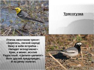 Птичка хвостиком трясет: «Берегись, лесной народ! Вижу в небе ястребка – Напа