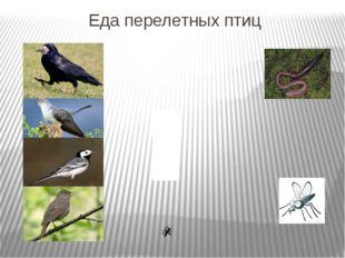Еда перелетных птиц