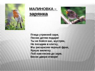 Птица утренней зари, Песню детям подари! Ты не бойся нас, шустряк, Не посадим