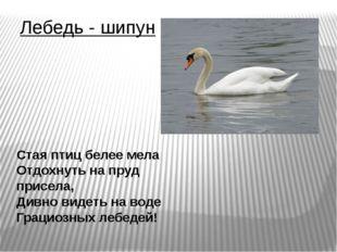 Лебедь - шипун Стая птиц белее мела Отдохнуть на пруд присела, Дивно видеть н