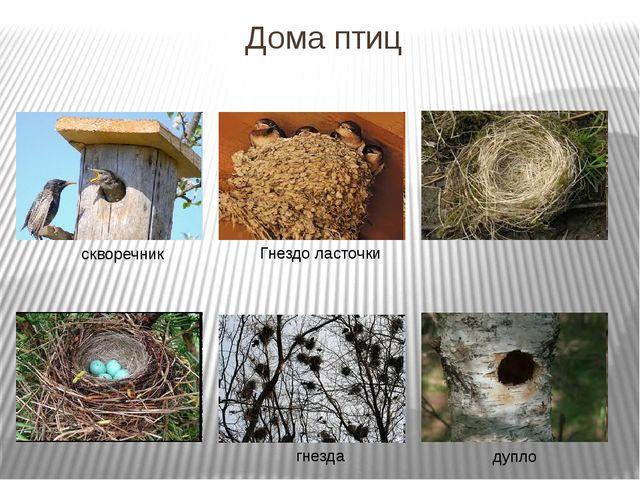 Дома птиц скворечник Гнездо ласточки гнезда дупло