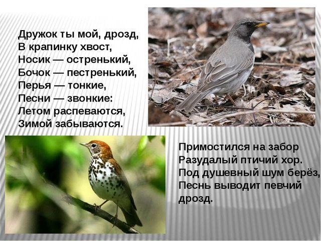 Примостился на забор Разудалый птичий хор. Под душевный шум берёз, Песнь выво...