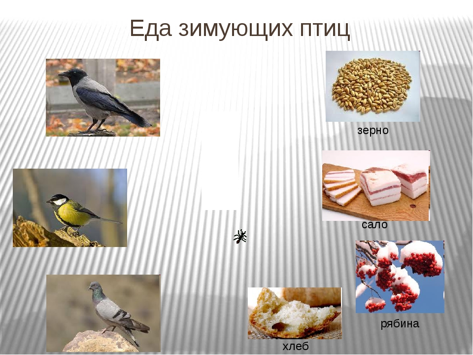 Еда зимующих птиц зерно сало рябина хлеб