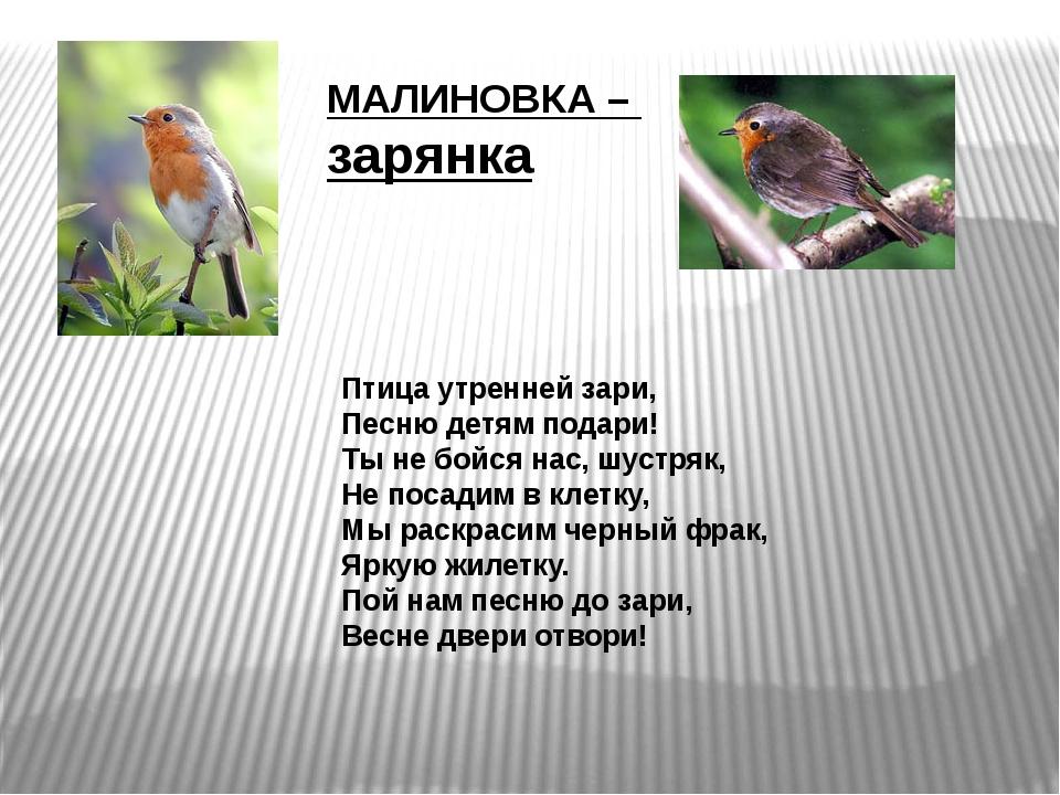 Птица утренней зари, Песню детям подари! Ты не бойся нас, шустряк, Не посадим...