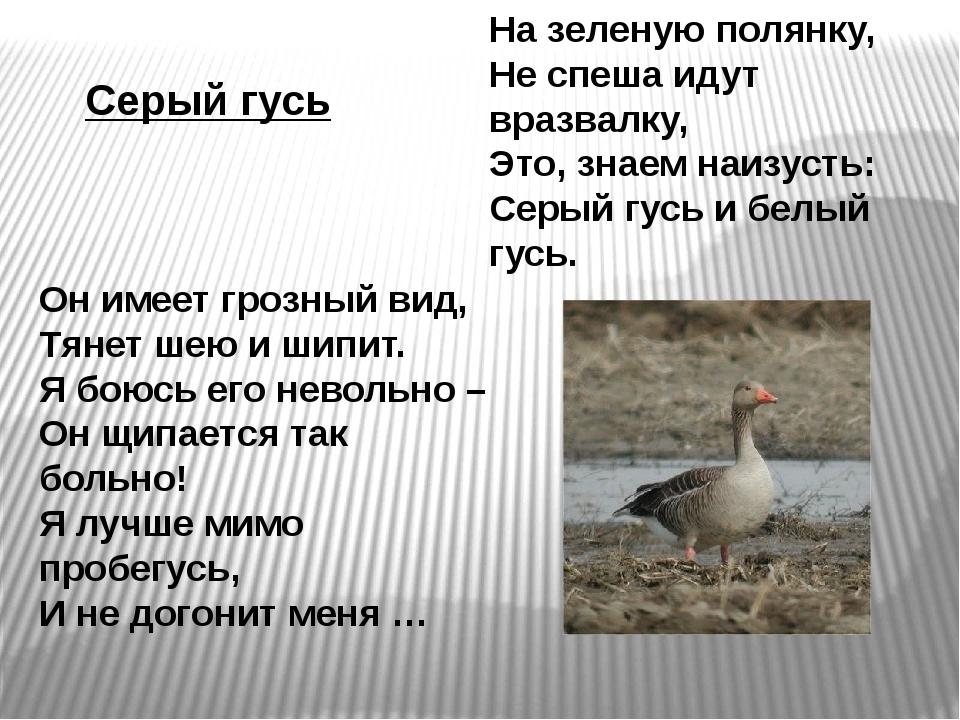 Серый гусь На зеленую полянку, Не спеша идут вразвалку, Это, знаем наизусть:...