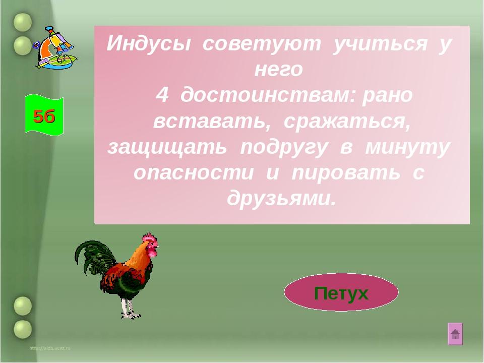 Петух 5б