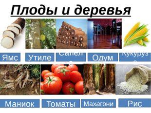 Плоды и деревья Ямс Утиле Сапеле Махагони Кукуруза Маниок Томаты Одум Рис