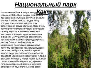 Национальный парк Какум Национальный парк Какум находящийся к северу от Кейп-