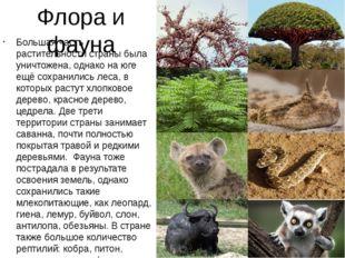 Флора и фауна Большая часть растительности страны была уничтожена, однако на