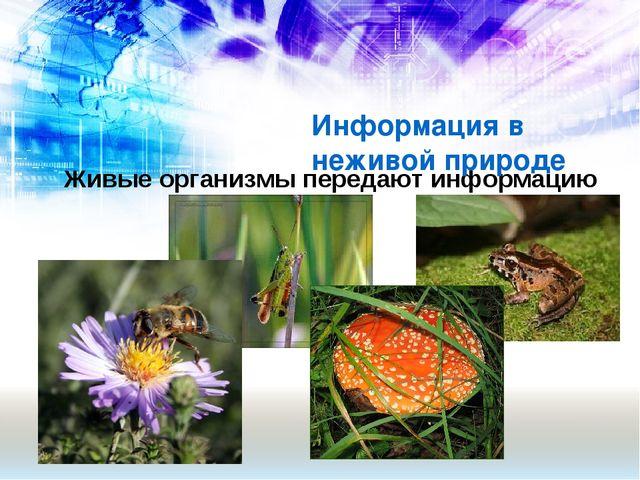 Живые организмы передают информацию Информация в неживой природе