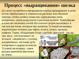 Процесс «выращивания» шелка До своего волшебного превращения коконы прожарива