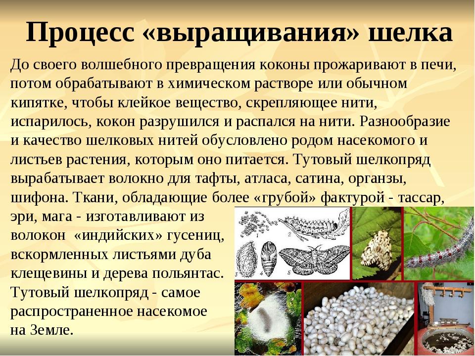 Процесс «выращивания» шелка До своего волшебного превращения коконы прожарива...