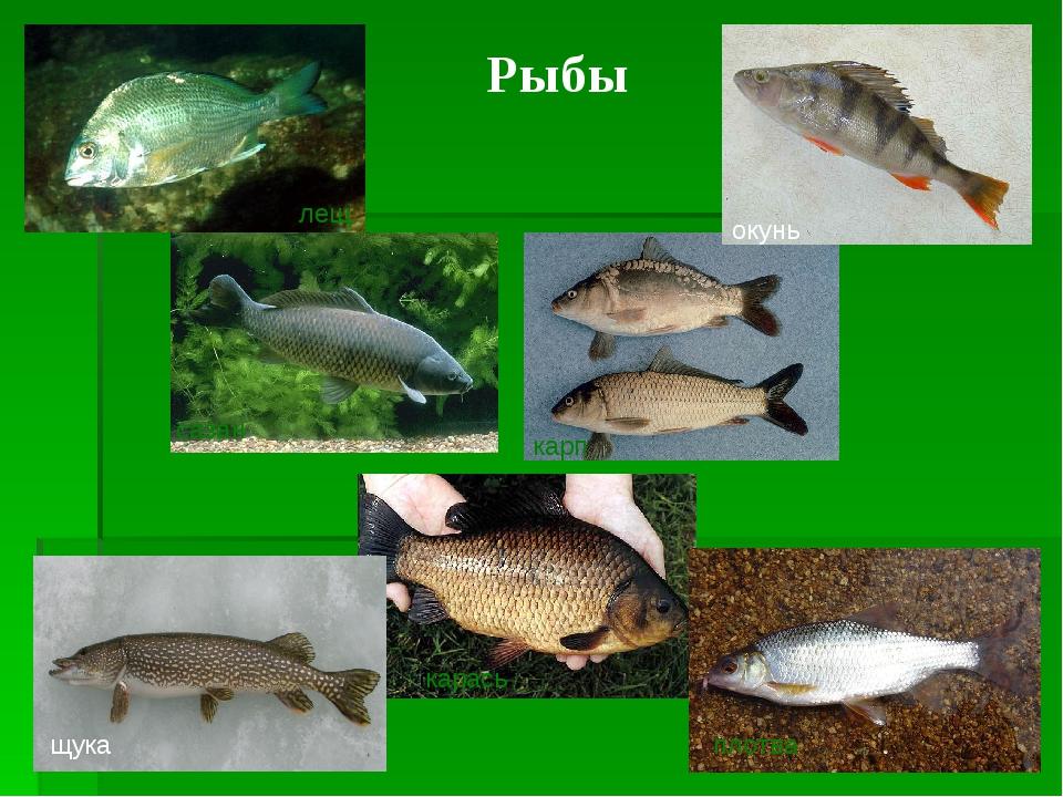 возведения купольного картинки рыб которые водятся в водоемах еао всего, съемка