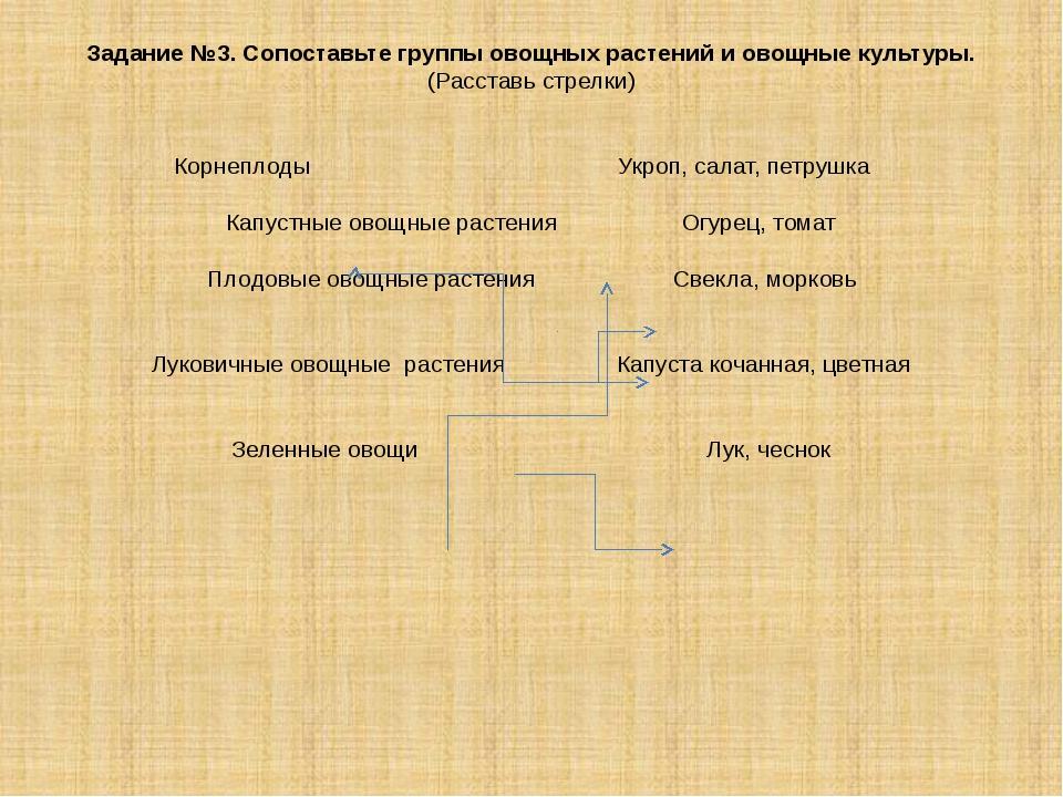 Задание №3. Сопоставьте группы овощных растений и овощные культуры. (Расставь...