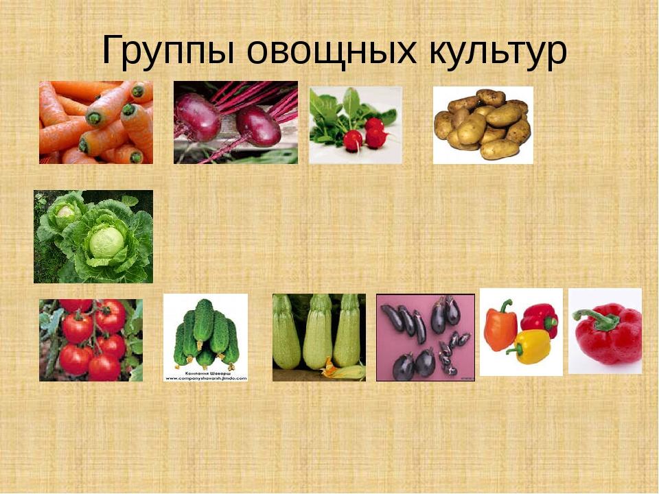 Группы овощных культур